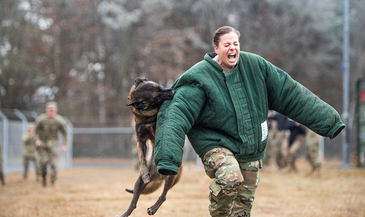Army Maj. Elizabeth L. Kassulke, an Emergency Room Nurse assigned to the 67th Forward Surgical Team, grimaces as MWD Lion leaps and grabs her sleeve. (U.S. Army photo by Maj. Chris Angeles)