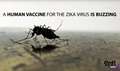 Scientists at the Walter Reed Army Institute of Research in Silver Spring, Maryland, have developed a vaccine for the Zika virus. They received a strain of the virus from Puerto Rico in November 2015, and have since created a purified inactivated virus, like the flu shot. The vaccine is called ZPIV, and so far, it looks promising that military medical research will be a key contributor to preventing the continued spread of the Zika virus.